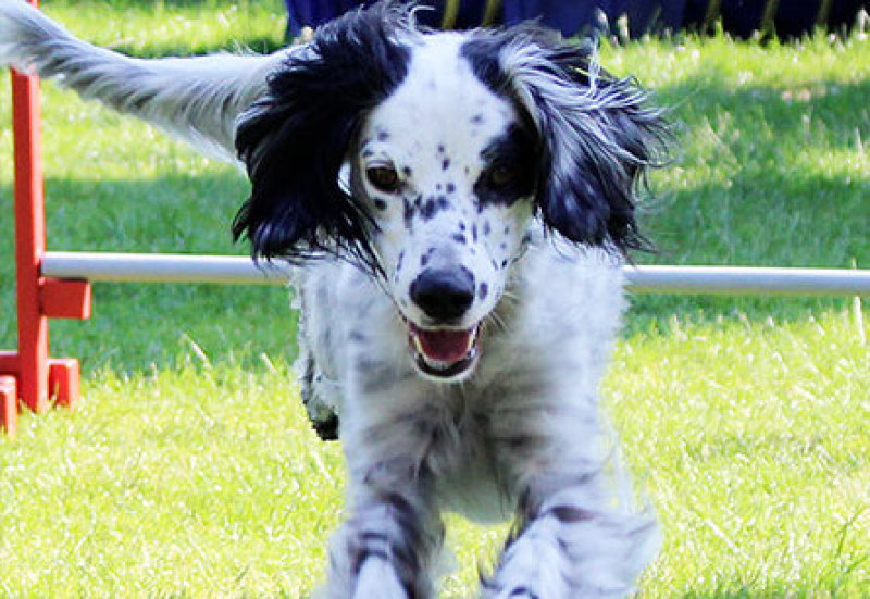 Hundesport/Agility